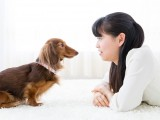 What Dog Owners Should Know About Homeowners Insurance