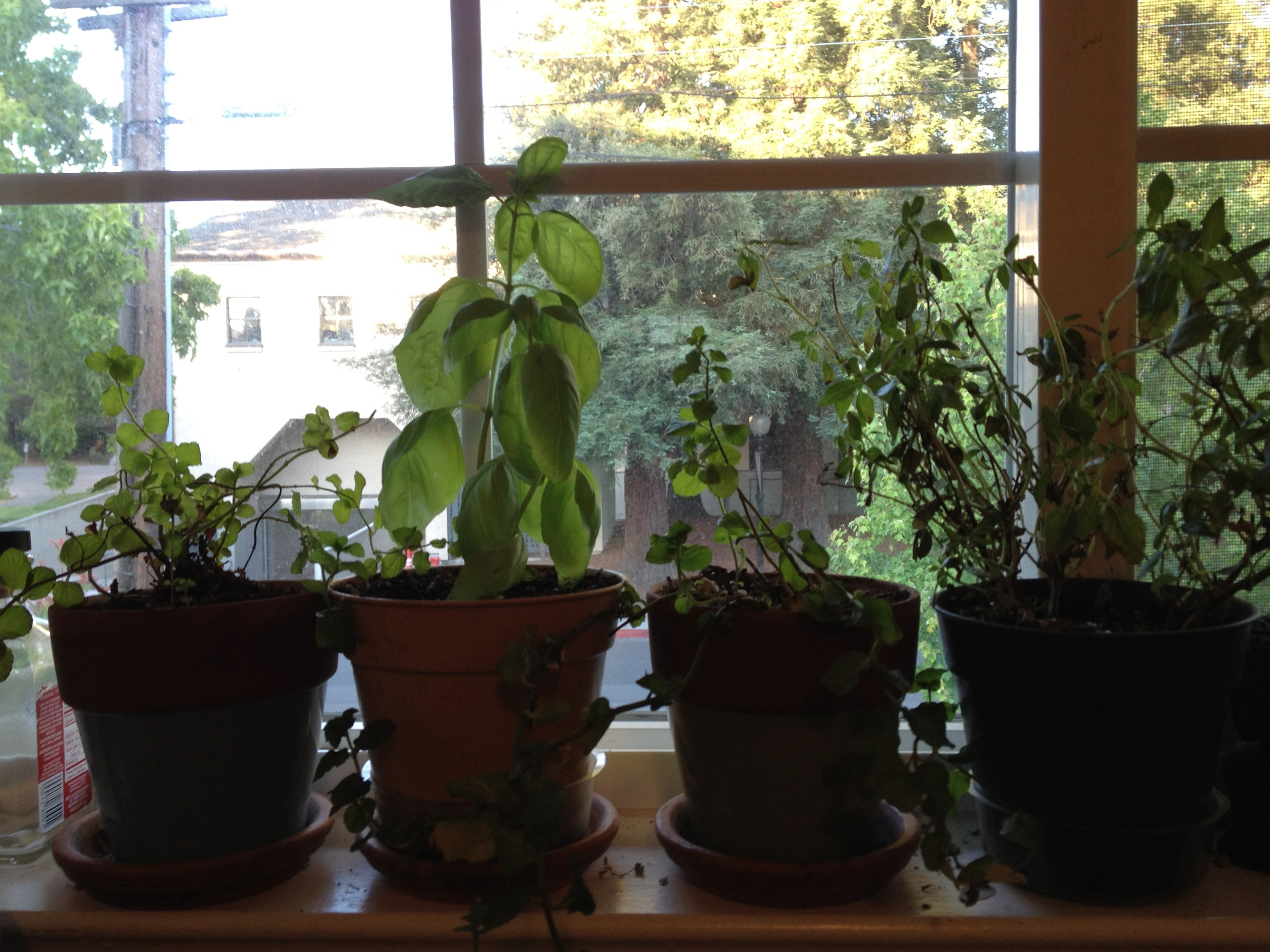 Apartment Herb Garden