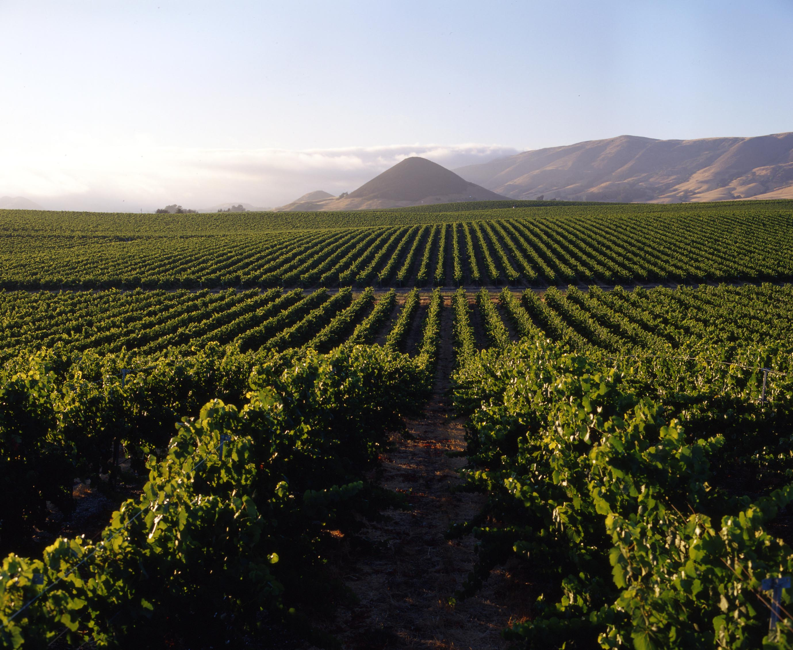 7 great california wine regions that are not napa travelnerd for California wine