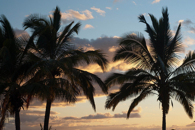 Palm_Tree_Sunset_1_big_mn