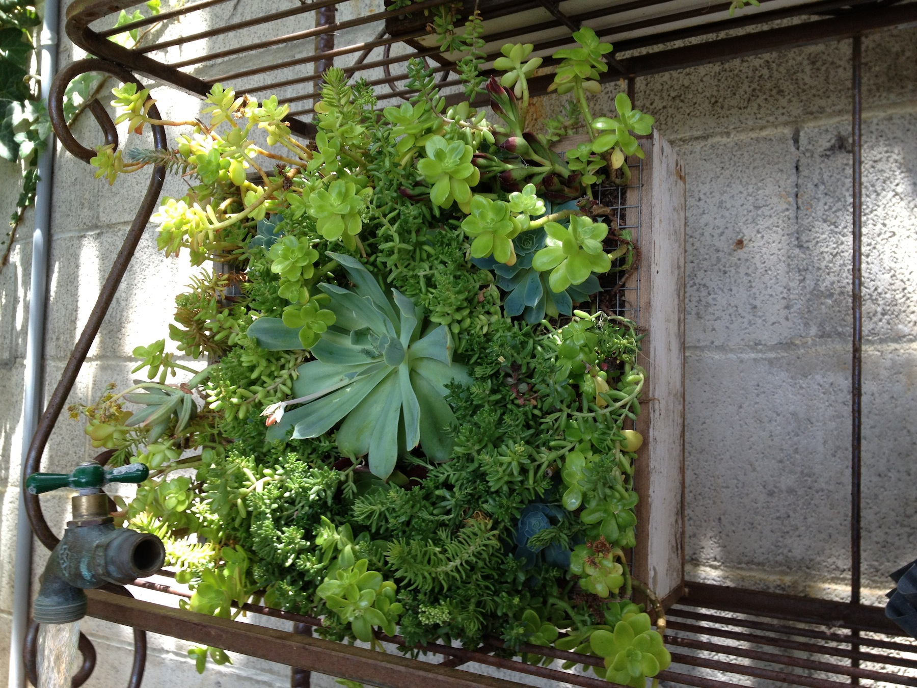 5 easy steps to gardening for apartment dwellers travelnerd - Practical tips for gardening in june ...