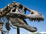 Over-Limit Fees Going the Way of the T. Rex
