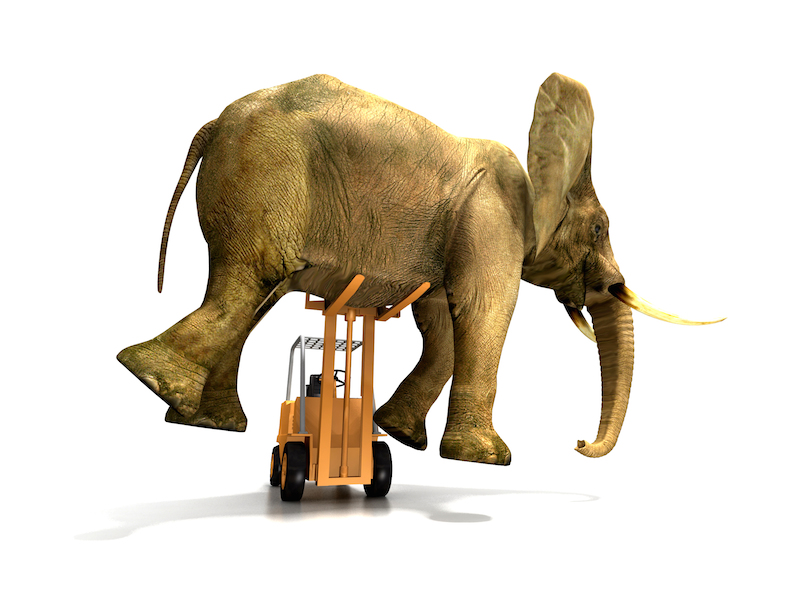 elephant delivery