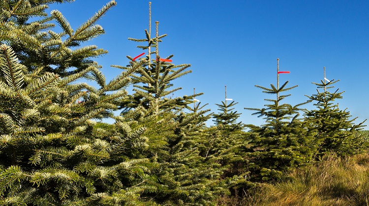 How To Buy A Christmas Tree On A Budget Nerdwallet