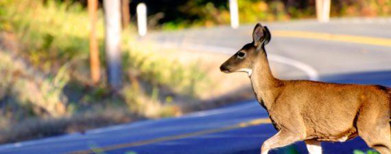 car insurance deer season