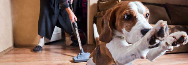 pet_vacuum_header_low2