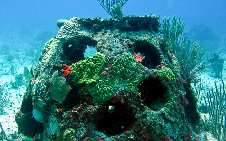 Your own marine reef