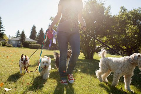 Pet walking