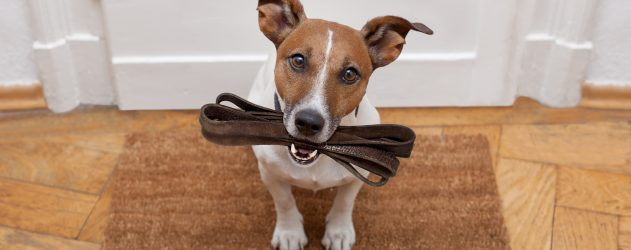 dog-friendly-designs-attract-home-buyers-and-remodelers