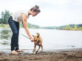 Camping with Canines: 10 Tips for Pet Owners